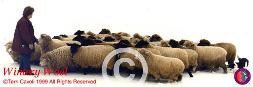10.-Wintery-Wool