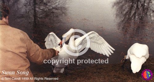 7.-Swan-Song