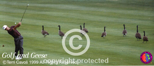 Golf-and-Geese_