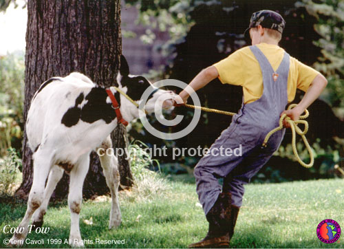 Cow-Tow-