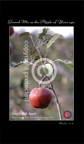 Single-Red-Apple-