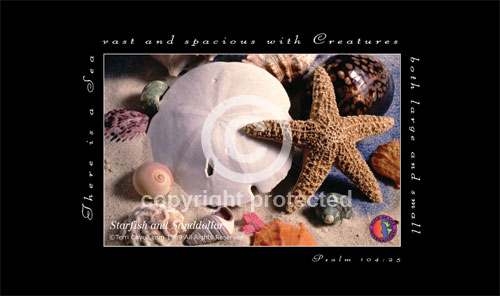 Starfish-and-Sanddollar-